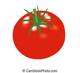 Tomato - Raster illustration of a single tomato isolated on...