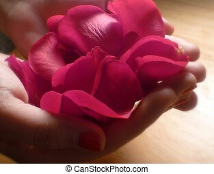 rose petals in hand - Hands holding red roses petals