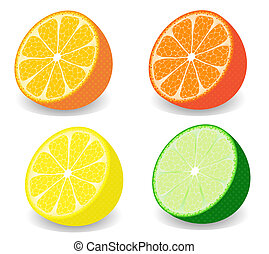 Citrus - Raster illustration of a set of four kind of citrus...