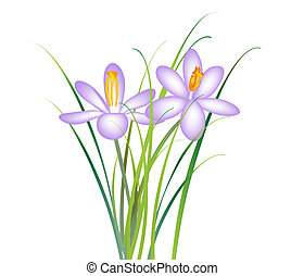 Crocus flower - rasterized illustration file of spring...