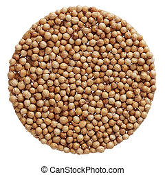 Cilantro coriander seeds - Group of cilantro coriander seeds...