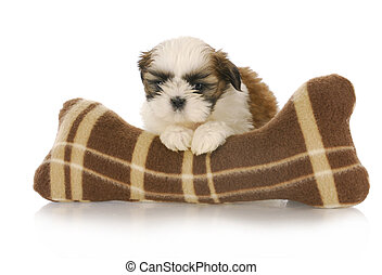 cute puppy - cute shih tzu puppy with stuffed toy on white...