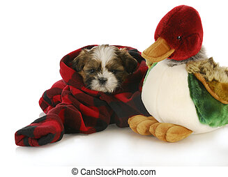 hunting dog - shih tzu puppy wearing hunting clothes laying...