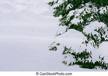 Pine Tree and Snow - Part of pine tree burried in snow