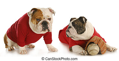 dog baseball teamates - two english bulldogs wearing red...