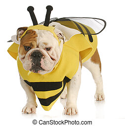 dog dressed like a bee - english bulldog wearing bumble bee...