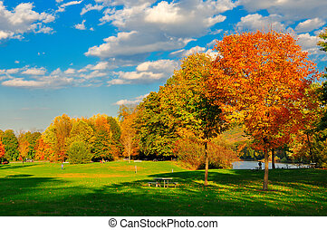 Fall foliage and a field.