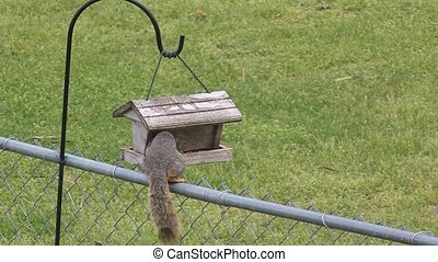 A Hungry Squirrel - They wait and watch us untill we fill...