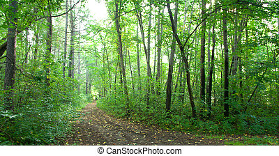 Forest landscape: a path in the dense dark forest