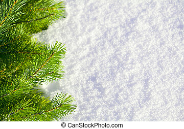 Winter forest background - Pine needles and snow The...