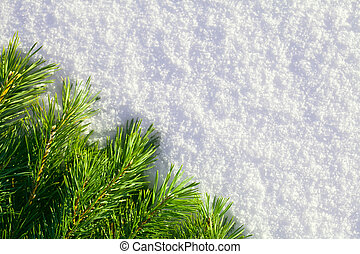 Winter forest background - Pine needles and snow. The...