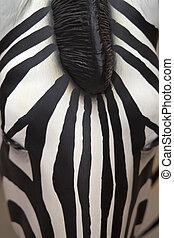 Mannequin Zebra - Mannequin zebra close up