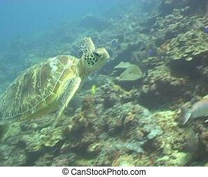 sea turtle underwater diving video - underwater diving video