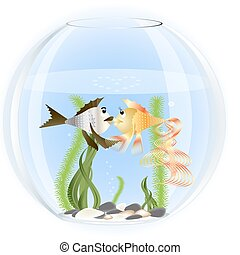 two fish in love - in a glass aquarium two fish in love