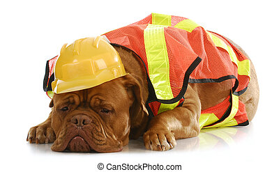 犬, 仕事