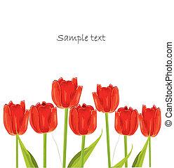 赤, チューリップ, 春, カード