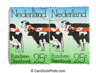 Dutch cattle on postage stamps - THE NETHERLANDS-CIRCA 1974:...