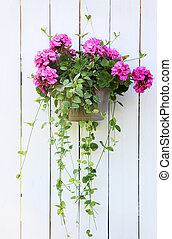 Hanging flower basket - Petunia Hanging flower basket over...