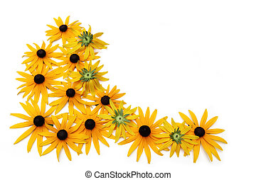 Black eyed susan - Group of black eyed susan flower isolated...
