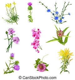 WildFlower Set - Set of wild flowers isolated on white...