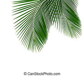 kokosnuss, blatt