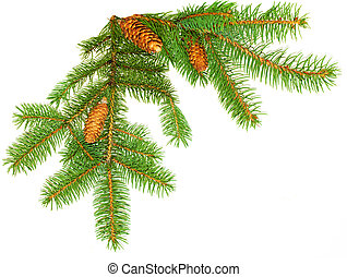 Pine Leaves and cones - Cones on pine branch isolated on...