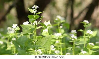 nettle flowers spring scene
