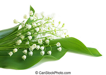 May Lily - Bundle of lily of the valley flowers isolated on...