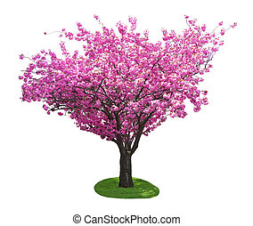 Cherry Tree - Single cherry tree in the spring time