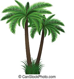 Palm trees - Detailed illustration of two palm trees in...