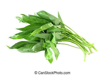 Water Spinach - water spinach, onchoy isolated over white