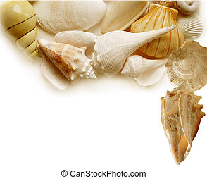Seashells - Sea shells with copy space for natural...