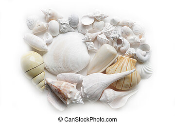 Seashell - Group of seashells isolated on white