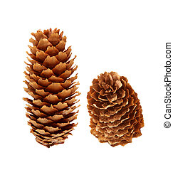 Two pine cone