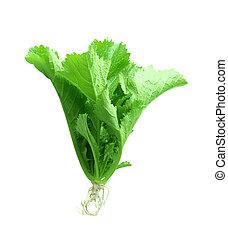 mostaza, verde, planta