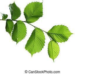 Elm Branch - elm branch