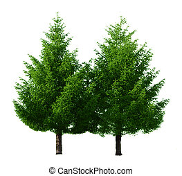 Two Pine Trees - Two pine trees isolated on white background