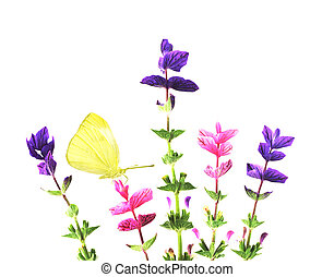 Annual Clary Sage - Five annual clary sage flowers and...