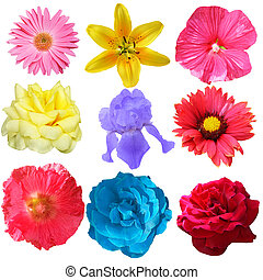 Flowers Set  - Set of flower heads isolated on white
