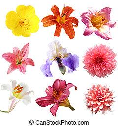 flor, Conjunto