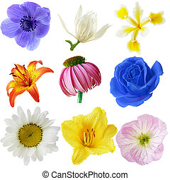 Flowers Collection - Flower heads collection, isolated on...