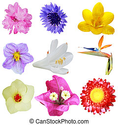 Head flowers - Set of colorful flower heads isolated on...