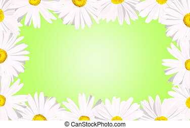 White daisies border over green - It's spring: White daisy...