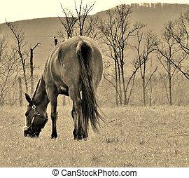 Lumen Equus - Horse Eating Grass