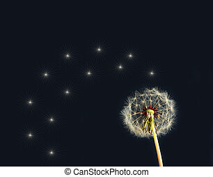 Dandelion over black background