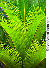 Nature Greenery - Closeup on a palm  large leaves