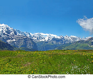 Alpine Meadow - Alpine meadow in the Swiss Bernese Oberland...