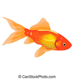 Goldfish - Aquarian a gold fish on a white background