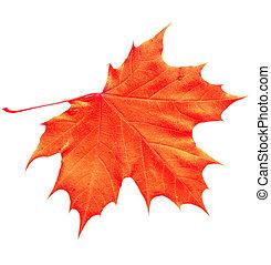 Orange Maple Leaf - Orange Yellow maple leaf isolated on...