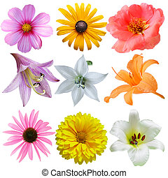 Flower Set - Set of flower heads isolated on white...